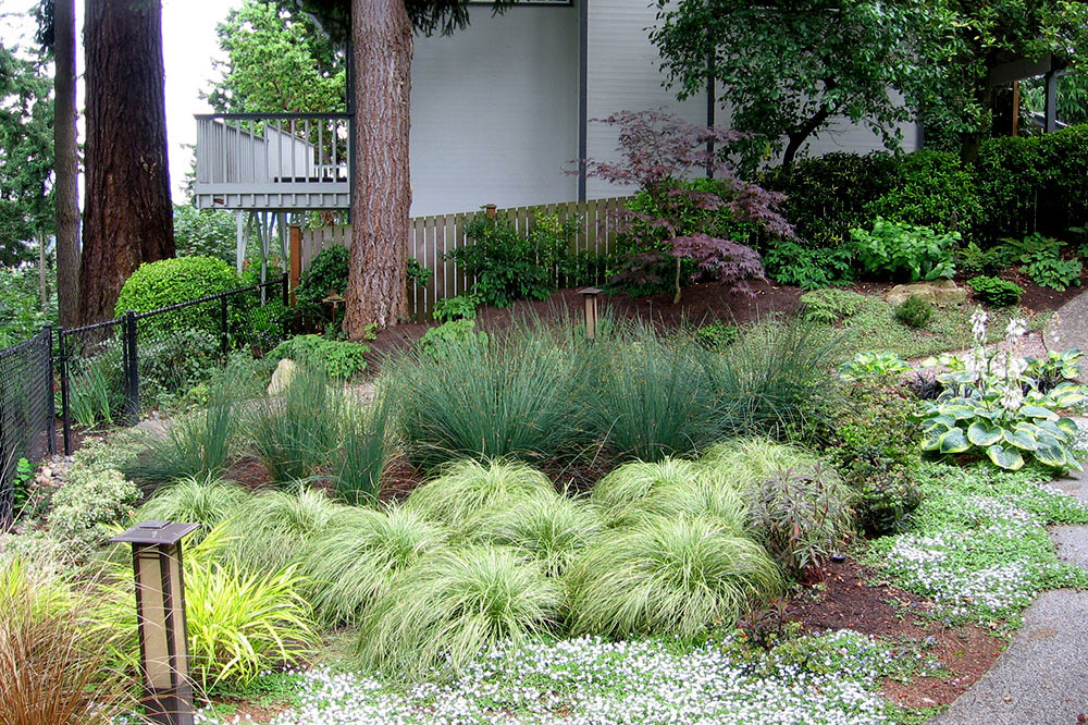Susie landscape designs portfolio for Ornamental grasses design plans